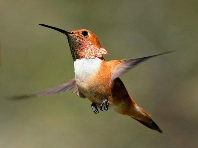 Colorful Birds - Beautiful Collection Seen On www.coolpicturegallery.us