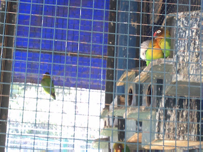 صور حديقة الطيور 12
