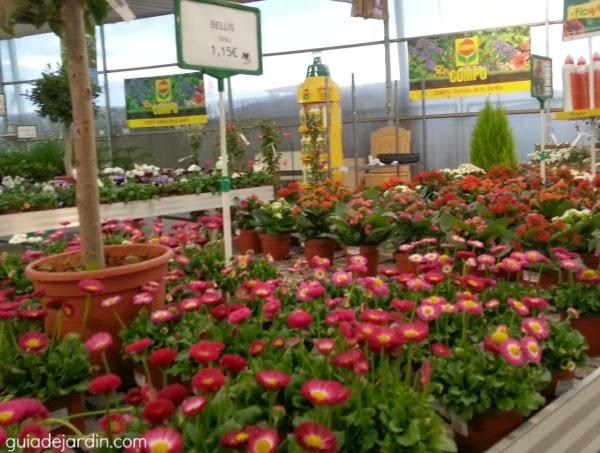De visita al vivero guia de jardin for Vivero casa jardin