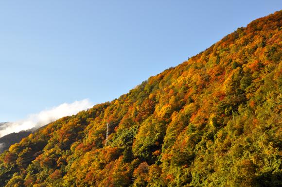立山 2012 紅葉