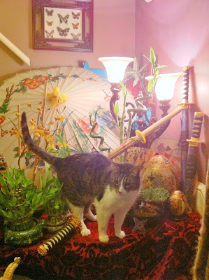 Samurai Cat Isosceles and Lucky Bamboo - Stein Your Florist Co.