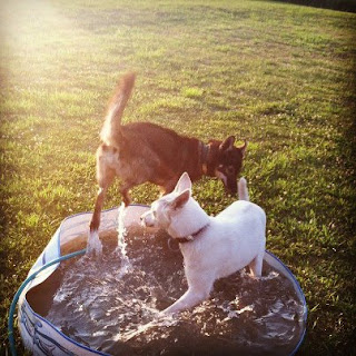 Image Result For Can Dogs Swim