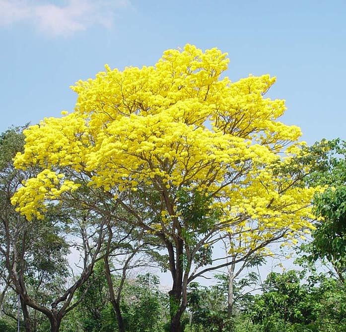 en la Ciudad de Tuxtla Gutiérrez Especies de plantas en peligro de