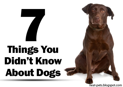 7 things you didn t know about dogs neat pets dogs