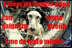 Me imagino galgo...