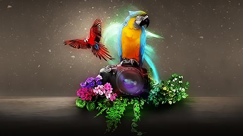 Digital Art Photoshop Tutorial Two Macaw