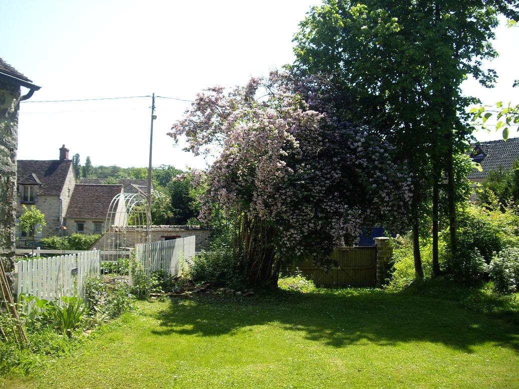 Derri re les murs de mon jardin un petit tour au potager - Derriere les murs de mon jardin ...