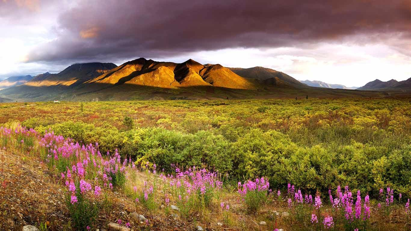 Dawn, fireweed and the Cloudy Range in the Ogilvie Mountains in late summer in Tombstone Territorial Park, Yukon, Canada (© Ron Erwin/All Canada Photos/Corbis) 138