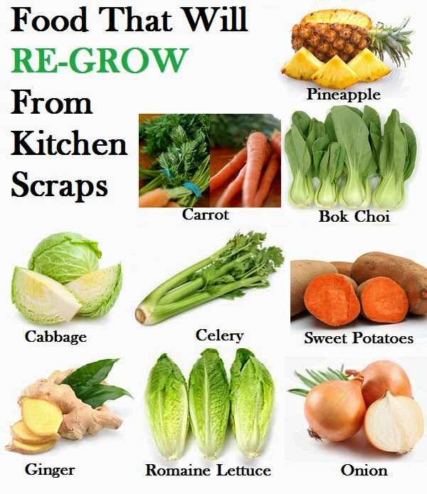 16 Foods That Will Re Grow From Kitchen Scraps: 16 Foods That Will Re-grow From Kitchen Scraps