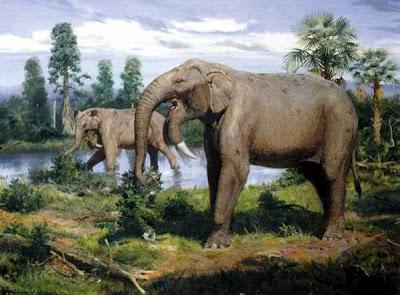elefantes fosiles Deinotherium
