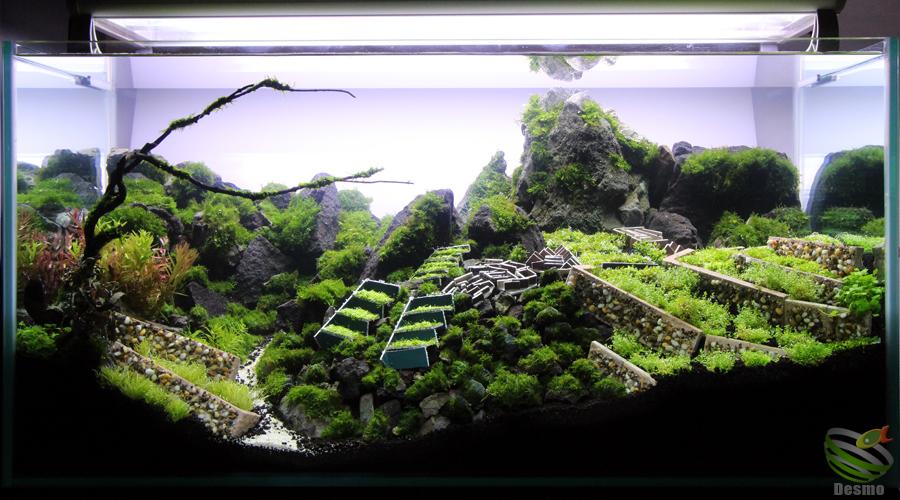 90cm水草レイアウト水槽