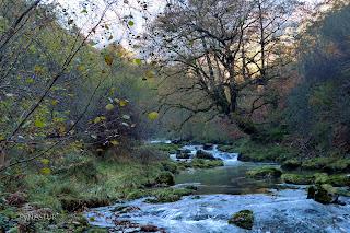 Rio Casaño Cabrales Asturias