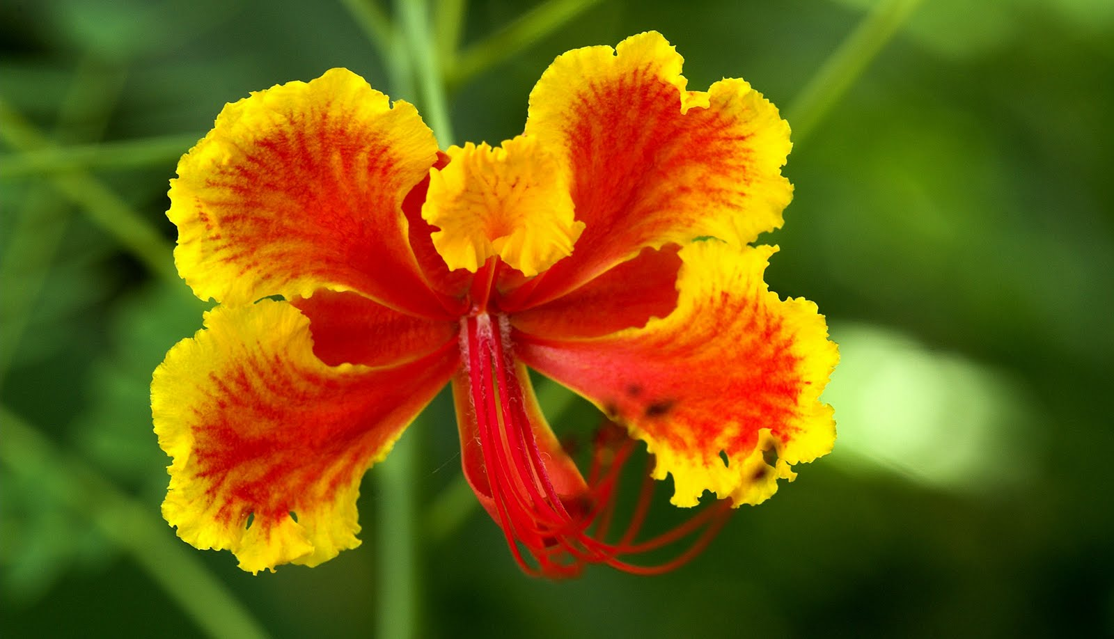 http://4.bp.blogspot.com/-G9xxS_fAs2E/Tah-pGo1-0I/AAAAAAAAGYk/Puzmo7JlhiM/s1600/flowers-wallpaper_1920x1102_83682.jpg
