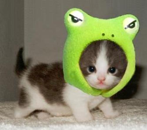 cool hd nature desktop wallpapers cute catscute cat pics