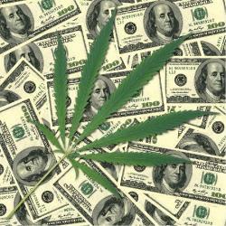 Cannabis - Plantar Cannabis