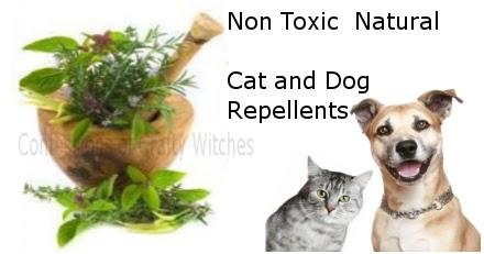 Dog And Cat Safe Herb Garden