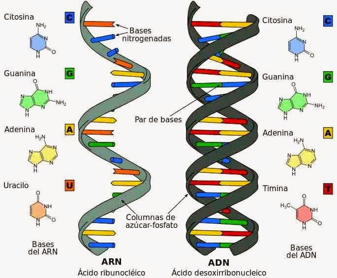DNA_RNA