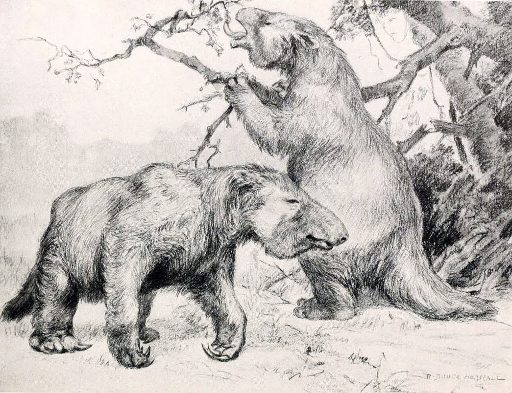Giant ground sloth still alive
