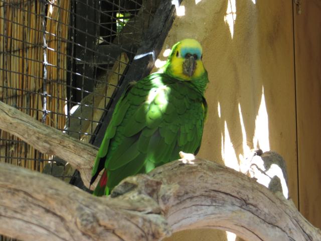 parrot palmitos park gran canaria