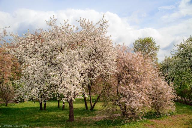 О жизни: Цветущий сад
