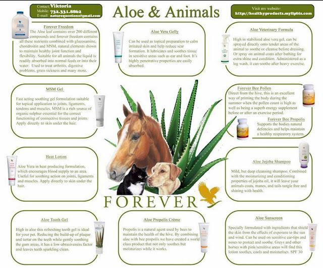 naturo shop natural pet care for a healthy dog cat horse bunny