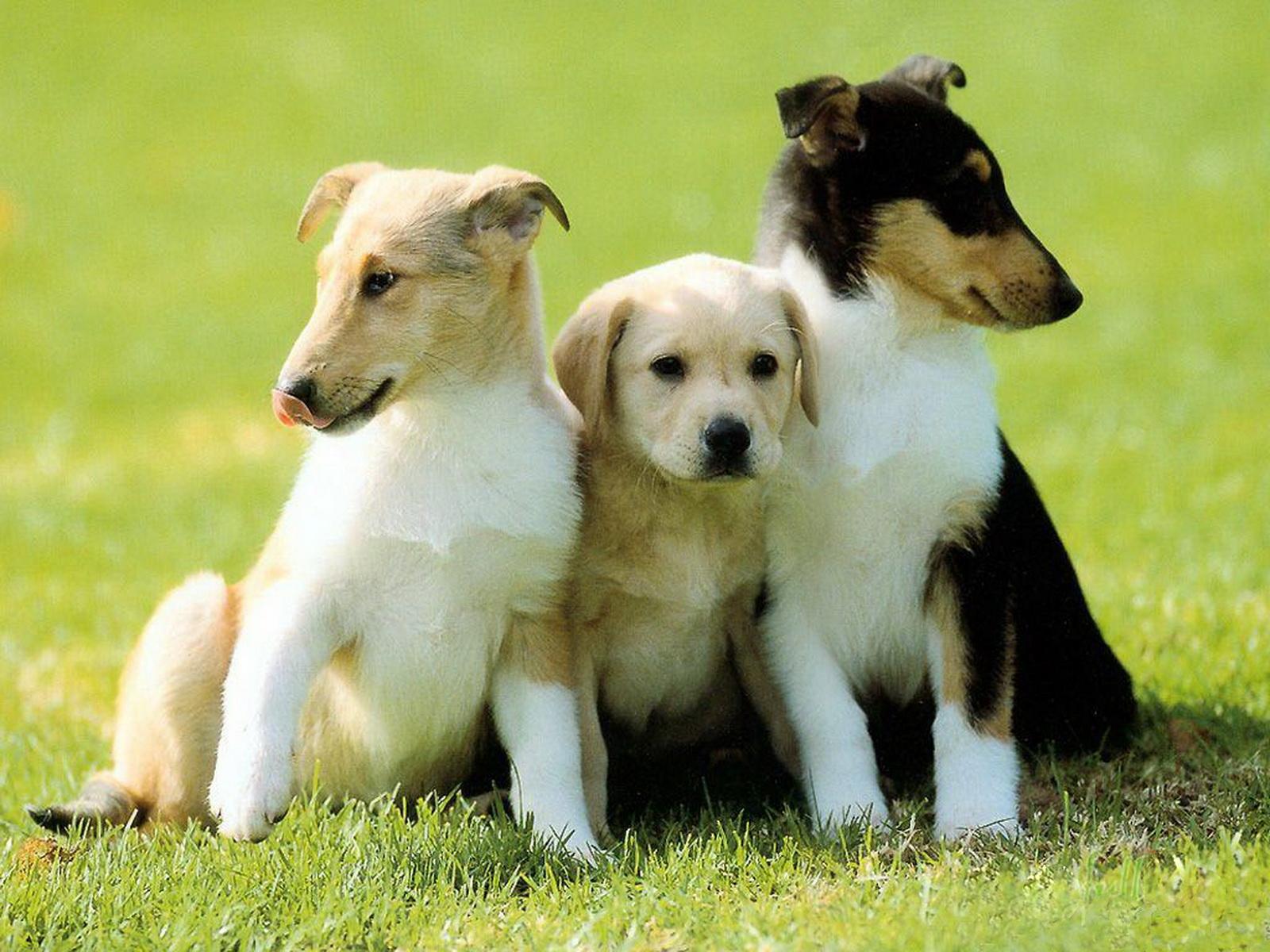 http://4.bp.blogspot.com/-GB-38IhHyiI/Tyw8pCgMDzI/AAAAAAAAA28/oGpHTduTq2I/s1600/19-Cute+Dog+1600x1200.jpg