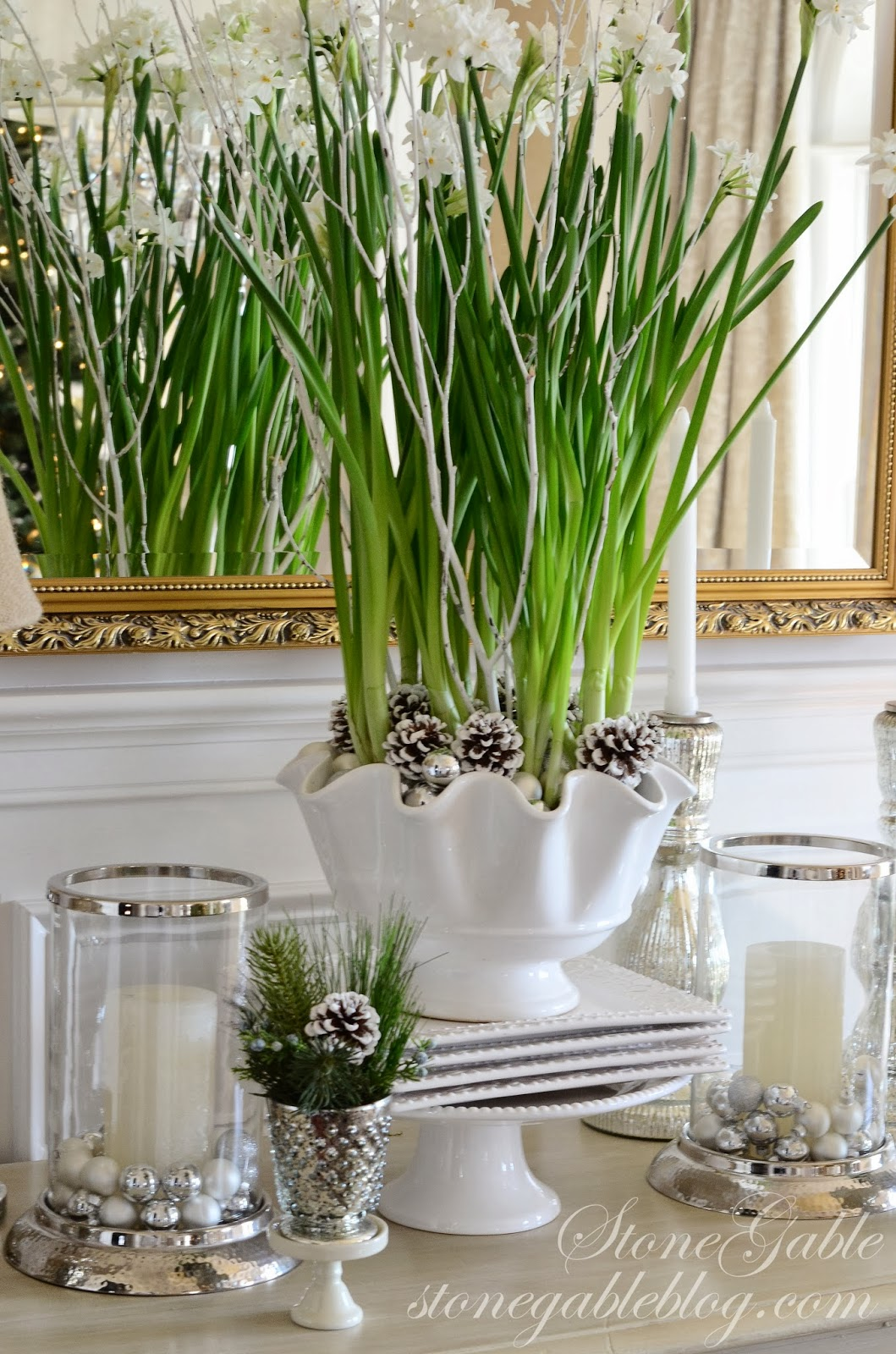 paper whites Narcissus ziva commonly known as papperwhites, these warm climate narcissus produce big clusters of starry white flowers with an intense fragrance popular for indoor forcing.