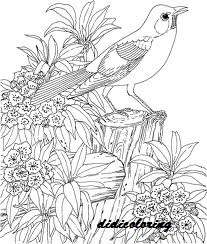 bird singing song among flowers and greenery beautiful scenery coloring page for girls and adults