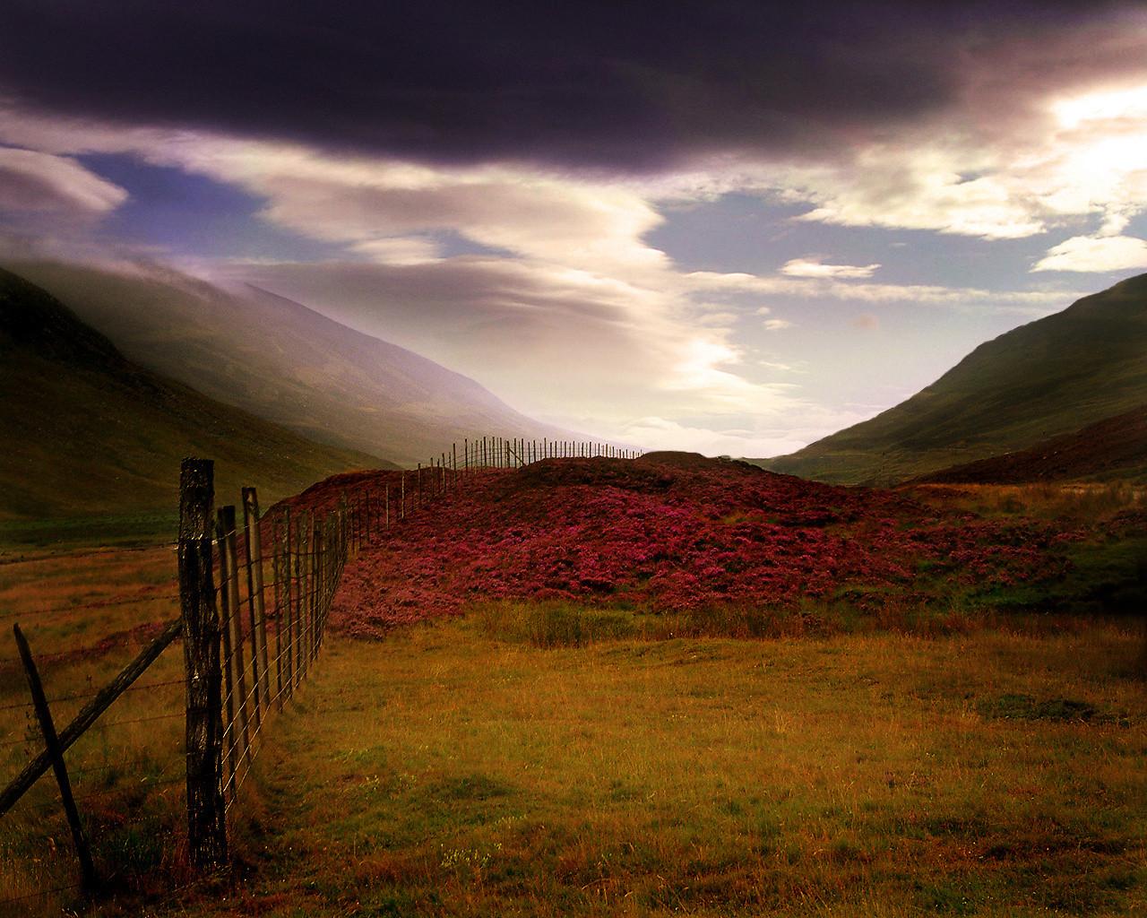 http://4.bp.blogspot.com/-GBVgdBecwgo/TsTzPIqS9II/AAAAAAAABoQ/OBFFH4psqWE/s1600/Scottish_Heather_Scotland.jpg