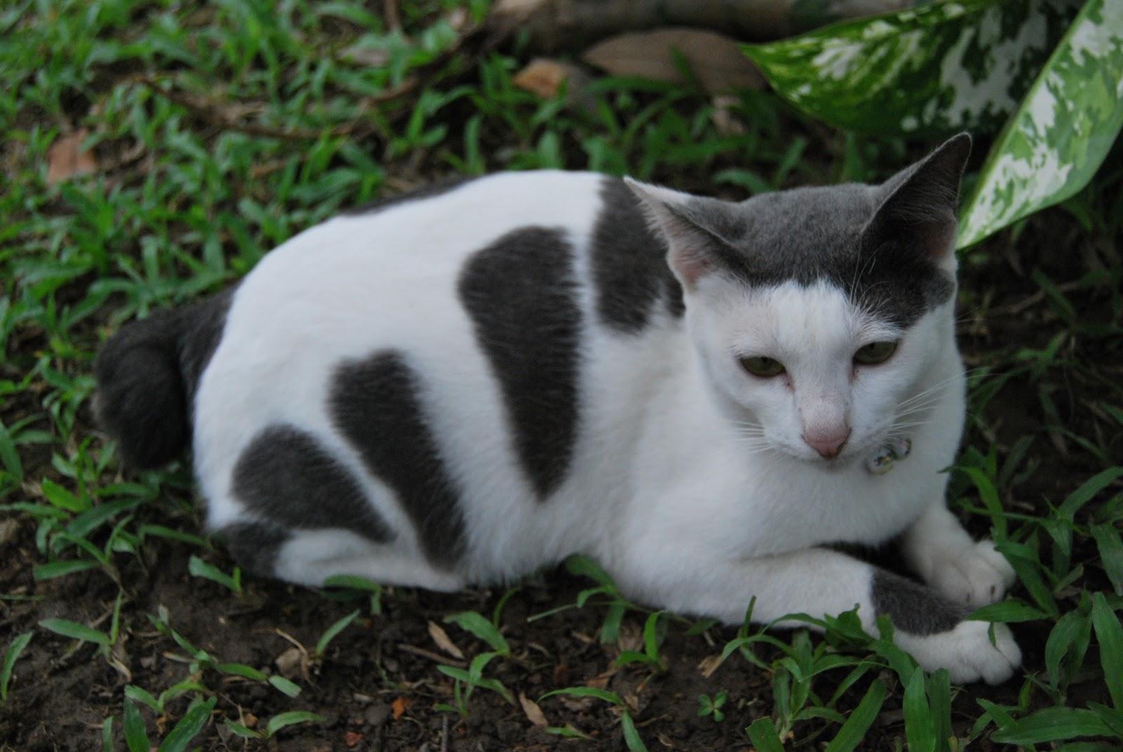 Kucing Mengeong Malam Hari 301 Moved Permanently Kelakuan