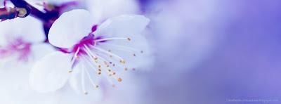 Couverture journal facebook fleurs
