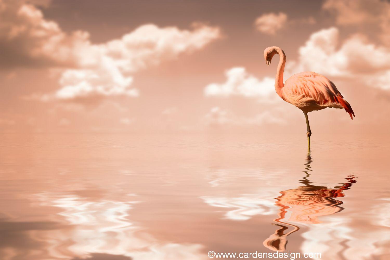 flamingo wallpaper   My Wallpaper Home