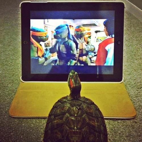 Un galápago viendo a sus héroes, las Tortugas Ninja