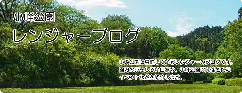 小峰公園 レンジャーブログ