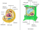 sel hewan dan tumbuhan