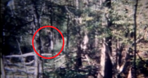 The Honey Island Swamp Monster | Bigfoot Research News | 476 x 250 png 183kB
