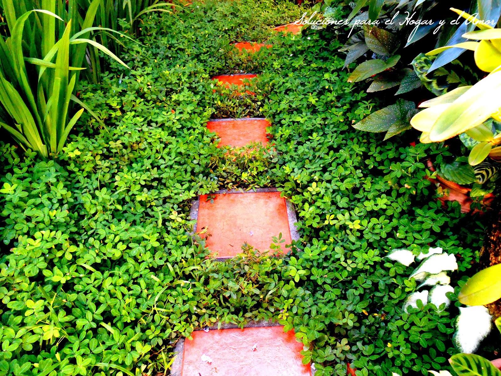 pasos de cerámica para jardín, plantas rastreras, cacahuate forrajero, plantas verdes