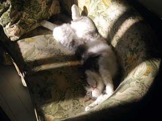 Kissa nauttii olostaan pikkusohvalla