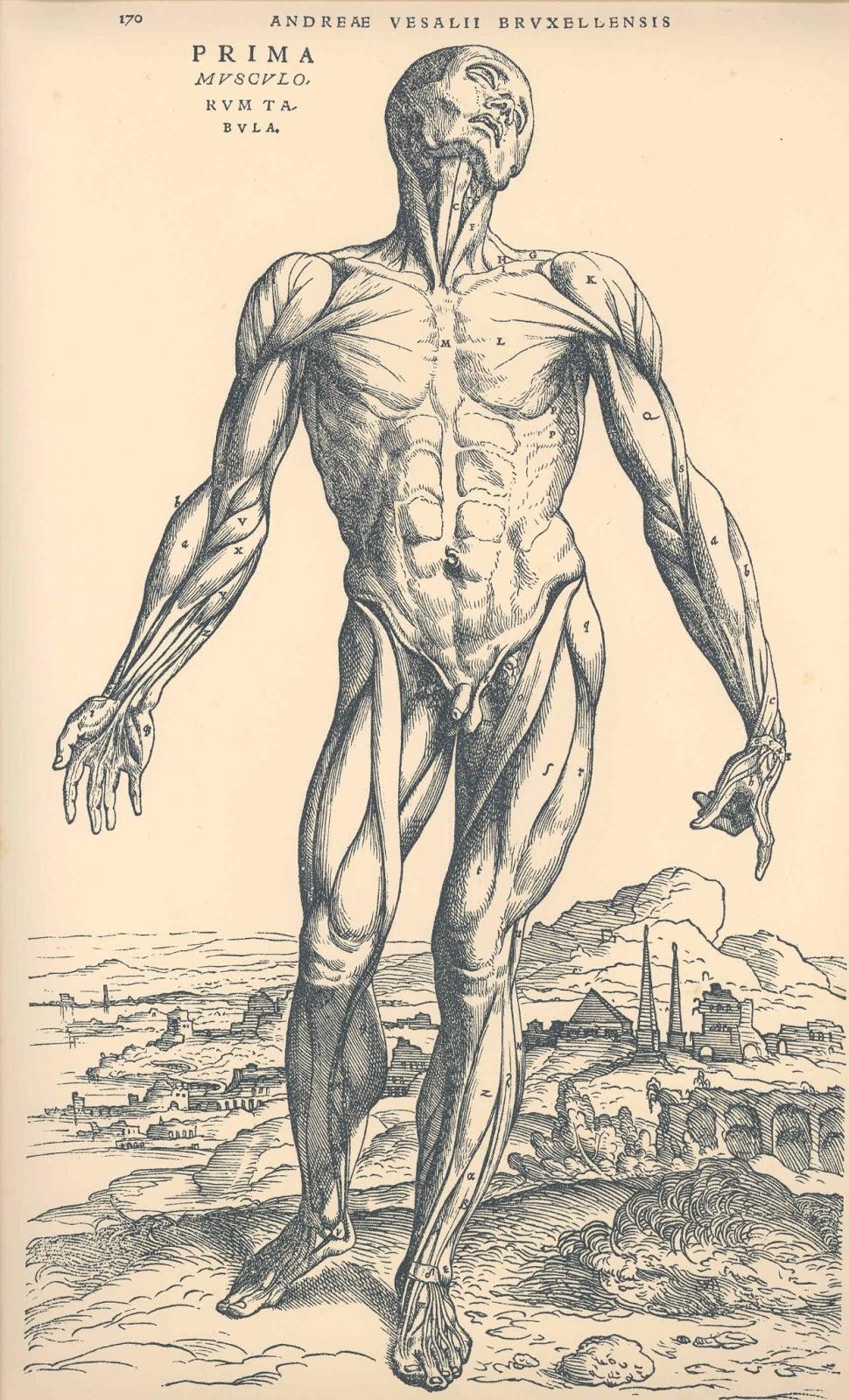 Anatomía y Fisiología ~ Leyenda Humana