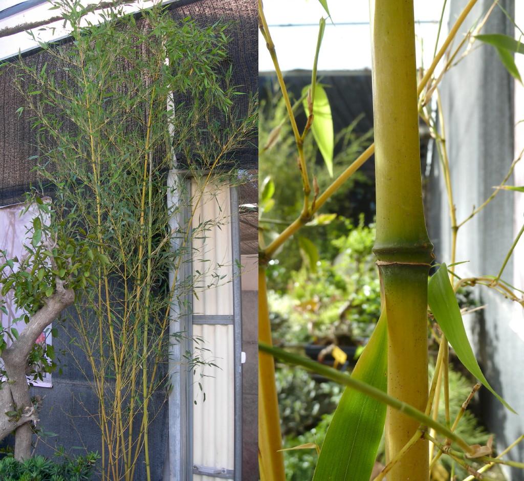 Adaptaciones de las plantas al frio y al calor - Plantas de frio y calor ...