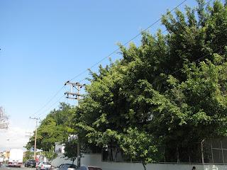 Análise de Risco para poda de árvores - Download