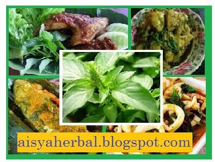 kegunaan daun kemangi bagi kesehatan