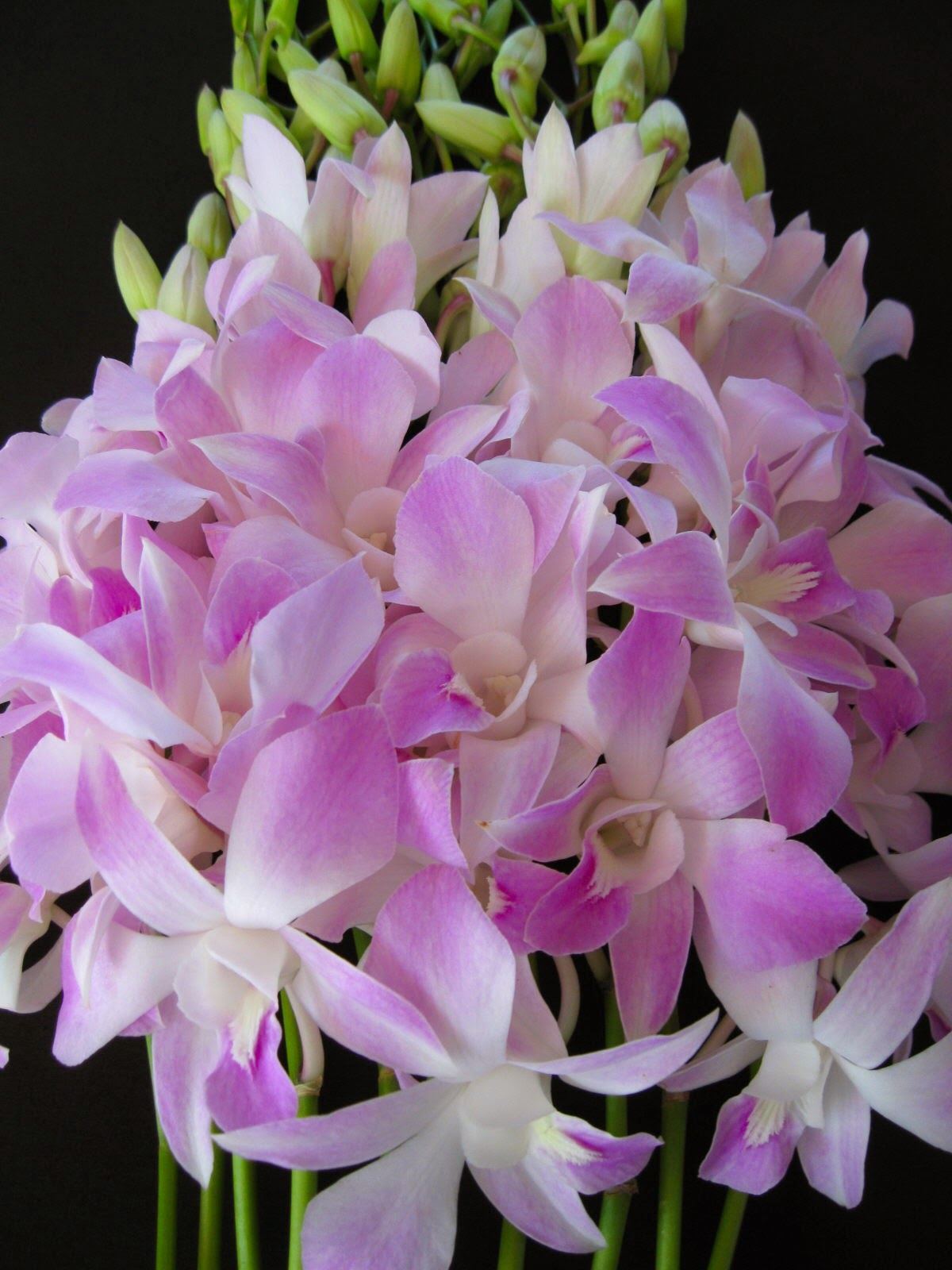 mothers day orchid flowers mothersdayorchidflowers jpg mothers day orchid flowers: day orchid decor