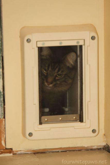 Nahum Navigates The New Door.