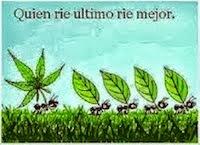 Hormigas . Com