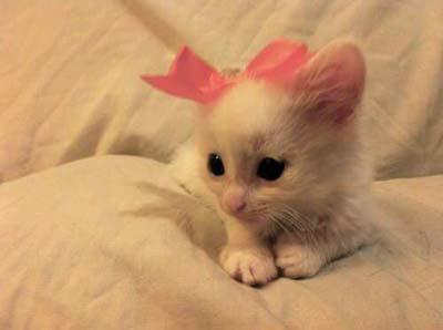 Gambar Kucing Lucu pita