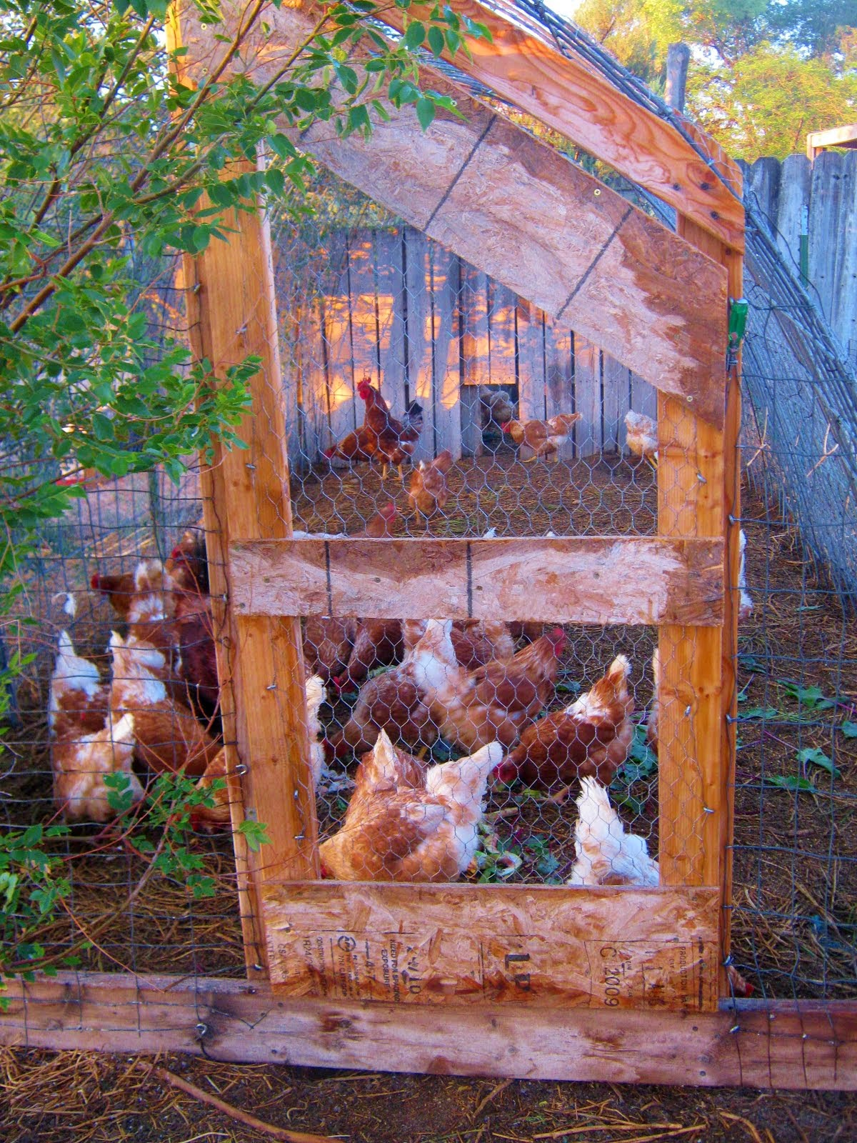 CATTLE PANEL CHICKEN RUN