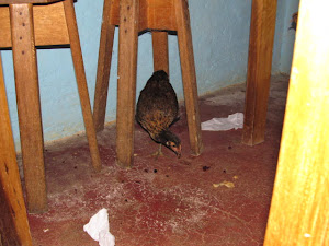 Chicken making itself right to home in our Dining Room!