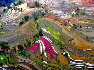 http://www.quecanteo.com/no-son-mosaicos-son-terrazas-de-arrozales-en-china/
