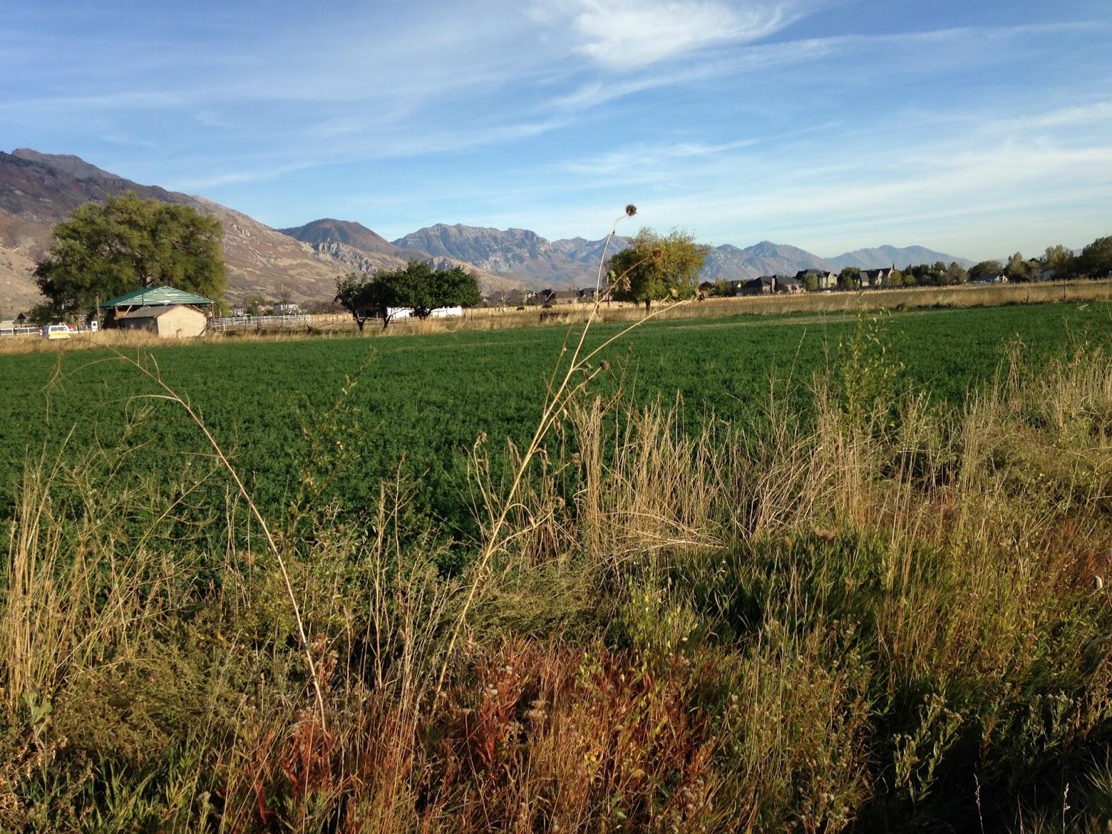 Utah Sustainable Gardening